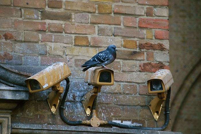 IP Camera Software